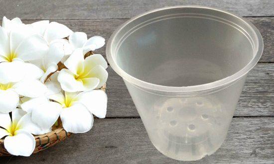 گلدان پلاستیکی شفاف